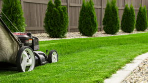 How To Rejuvenate Your Lawn