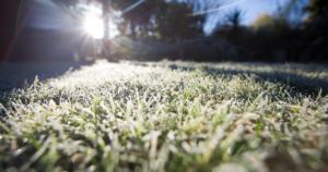 Prepare Lawn for Winter